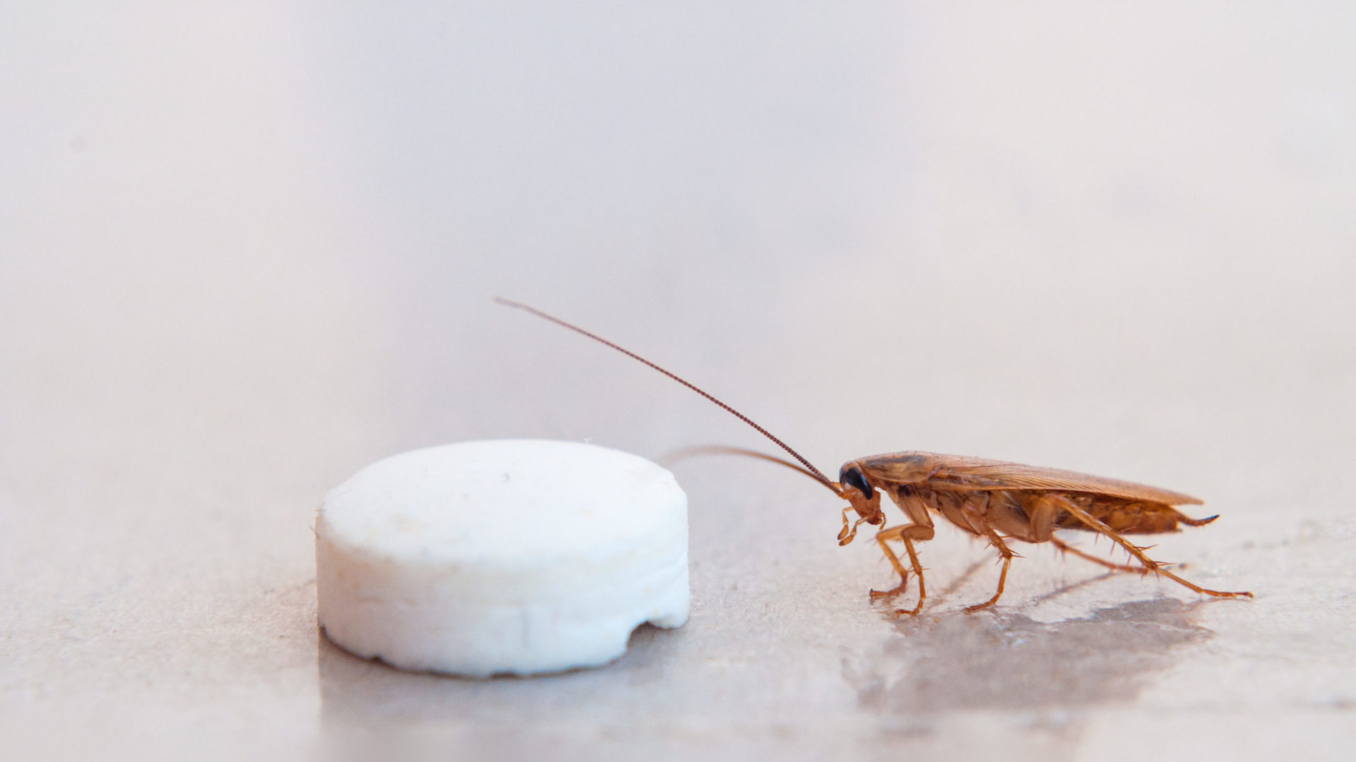 cockroach and bait