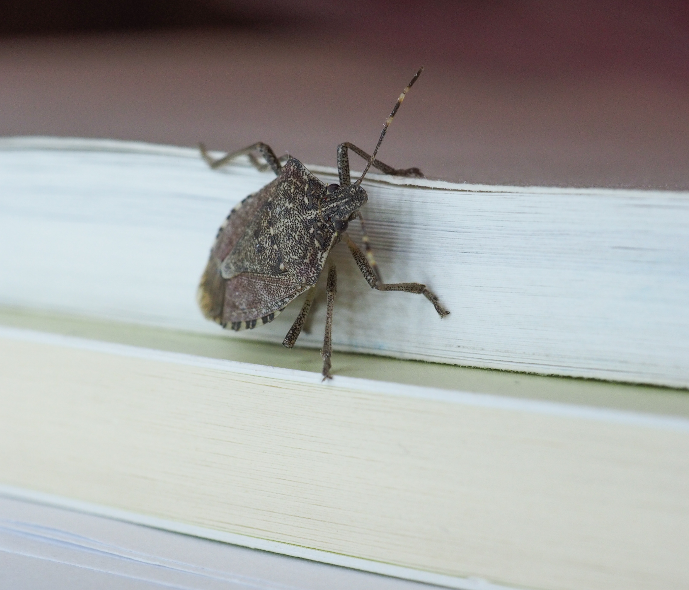 stink bugs on book