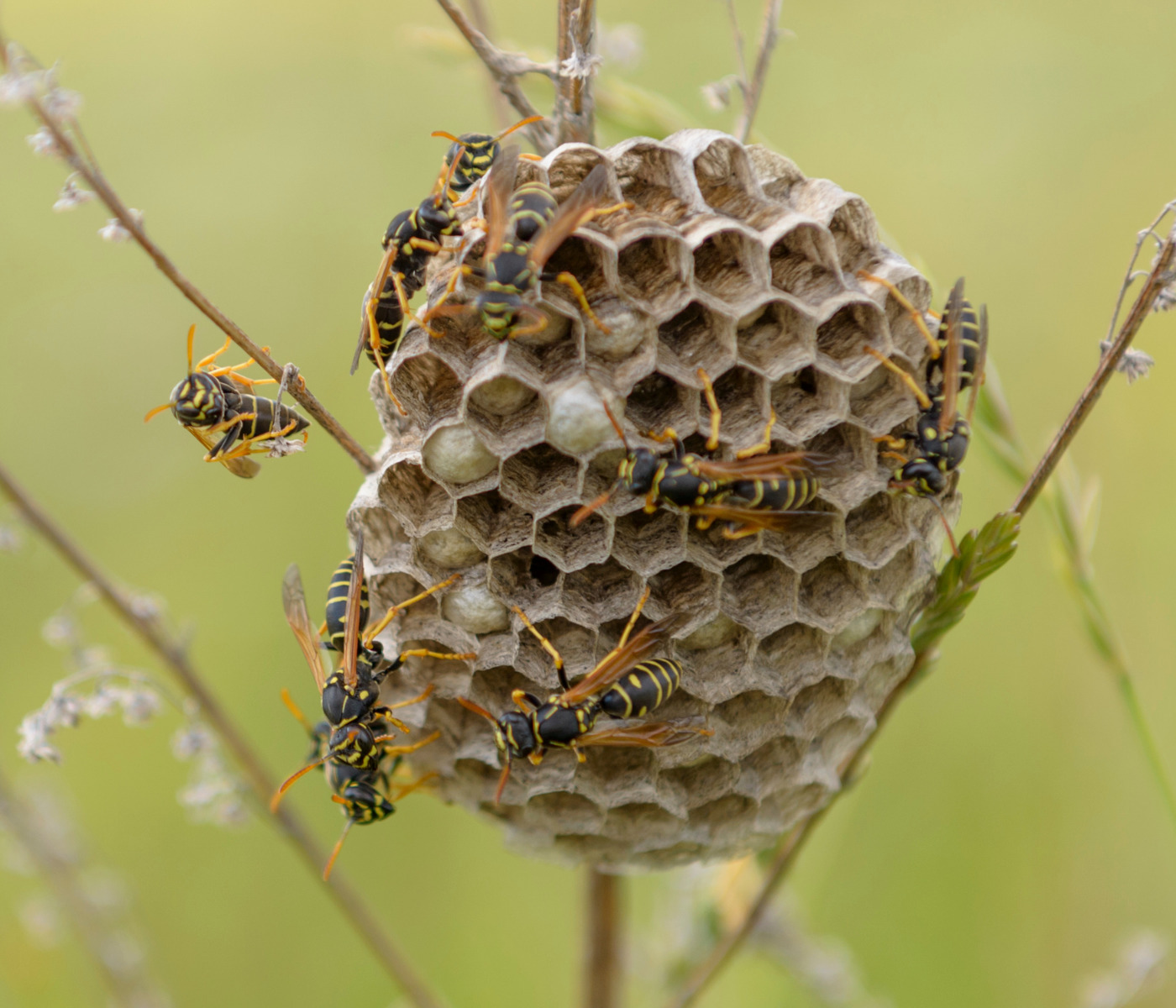 wasp nest with wasps on it